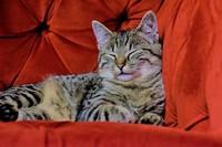 6 cat-1866173_640