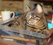 cat-1918735_640