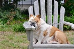 dog-848390_640
