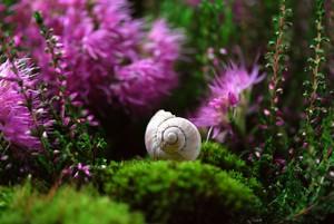 snail-582201_1280.jpg