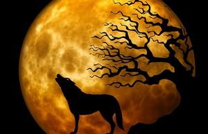 wolf-963081_640.jpg
