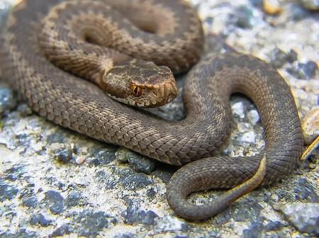 snake-947367_640.jpg