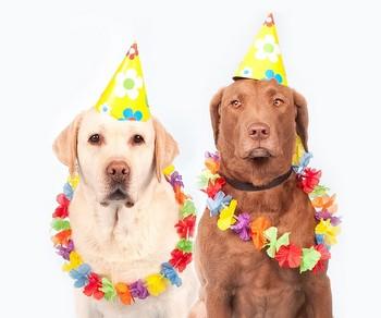 Labrador Ernst Humor Pet Carnival Dogs